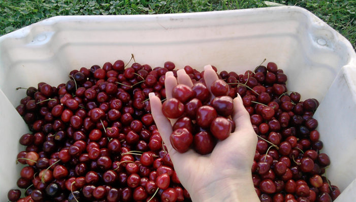 Cseresznyeidő