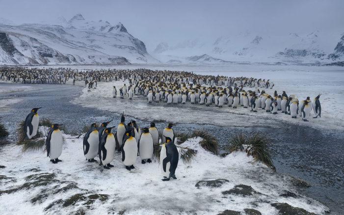 Regénytár Nívódíj: az Antarktisz színre lép