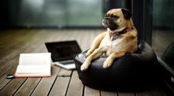 A drága kis kutyus – három kisabszurd