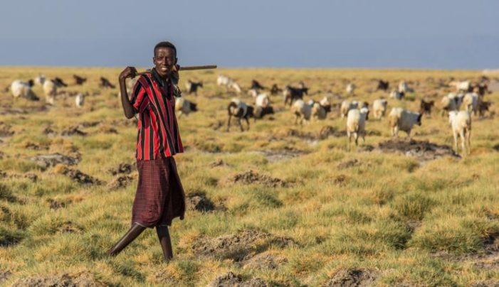 Regénytár Nívódíj: forró üdvözlet Afrika szarváról